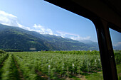 View out of the train window, apple orchard, Travelling through Vinschgau with the Vinschger Railway, Transport, Vinschgau, South Tyrol, Italy