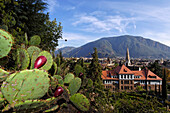 Cactus along the Guntschna promenade, view over Bozen, South Tyrol, Italy
