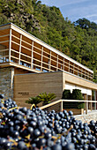 Grapes in front of the design hotel Pergola Residence in the sunlight, Merano, Val Venosta, South Tyrol, Italy, Europe