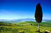 Zypresse unter blauem Himmel, Blick zum Monte Amiata, Val d'Orcia, Toskana, Italien, Europa
