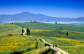 Hikers on a country road under blue sky, view to Monte Amiata, Val d´Orcia, Tuscany, Italy, Europe