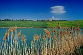 See mit Schilf unter blauem Himmel, Crete, Toskana, Italien, Europa