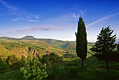 Hügellandschaft im Sonnenlicht, Val d'Orcia, Toskana, Italien, Europa