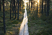 The morning sun shining on a wooden path that is leading to a marsh