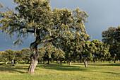Pasture. Monfrague Natural Park. Caceres province. Extremadura. Spain