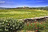 Spring. Minorca. Balearic Islands. Spain.