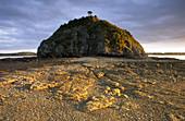 Rock Hill with Single Tree near Kerikeri, Northland, New Zealand