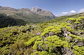Key Summit, Routeburn Track, Fiordland National Park, Southland, South Island, New Zealand