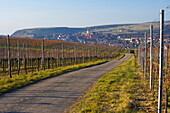 winter, Burkheim with vineyards, Kaiserstuhl, Baden-Württemberg, Germany, Europe