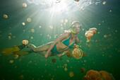 Swimming with harmless Jellyfishes, Mastigias papua etpisonii, Jellyfish Lake, Micronesia, Palau