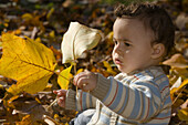 Child playing with autumn foliage, München, Bavaria, Germany