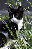 A black and white kitten outdoors