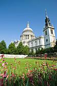 Festival garden  Saint pauls cathedral, City of london  England  UK