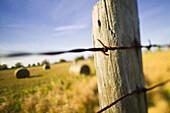 Florida wheatfield selective focus ladscape-self promotion