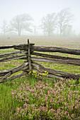 Cedar split-rail fence with prairie smoke and distant oak trees in light fog