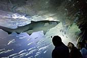 Oceanogràfic aquarium, City of Arts and Sciences. Valencia, Comunidad Valenciana, Spain