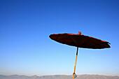 Asiatic sunshade under blue sky, Shan State, Myanmar, Burma, Asia