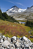 Late summer meadows below Ochre Mountain, Athelney Pass and Mount Ethelweard 2819 m 9249 ft are in the distance Coast Mountains British Columbia Canada