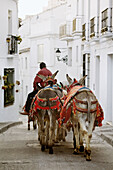 Burrotaxis donkeys, Mijas. Pueblos Blancos (white towns), Costa del Sol, Malaga province, Andalucia, Spain