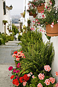 Flowers in street, Mijas. Pueblos Blancos (white towns), Costa del Sol, Malaga province, Andalucia, Spain