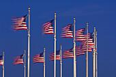 A row of American flags that encircle the Washington Monument blow in predawn light, Washington D C, U S A