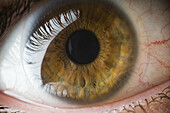 Adult, Adults, Body, Body part, Body parts, Brown eyes, Close up, Close-up, Closeup, Color, Colour, Contact lens, Contact lenses, Contemporary, detail, details, Eye, Eyelash, Eyelashes, Eyes, human, Mirror image, Mirror images, One, One person, Optics, pe