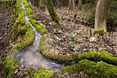 Calc-sinter source, water, nature phenomenon Stone channel, Franconia, Bavaria