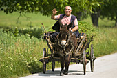 Farmer on a donkey cart, coming back from grass harvest, friendly waving at the photographer, Danube valley, Northern Bulgaria