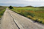 Country road. Seseña. Castile-La Mancha. Spain