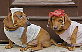 Two dogs dressed up in shirts, hats, eye glasses, and watches.