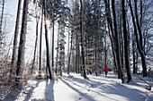 Person jogging in winter, Muensing, Bavaria, Germany