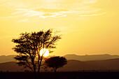 Idyllisch Landschaft bei Sonnenuntergang, Draa-Tal, Süd Marokko, Marokko, Afrika