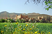 View over flower meadow at Kasbah between High and Anti-Atlas, Taliouine, South Morocco, Morocco, Africa
