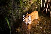 Toy tiger standing in the water