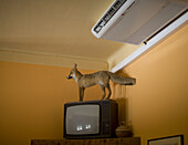 Air-conditioner, Air-conditioning, Antiquated, Color, Colour, Concept, Concepts, Corner, Corners, Decoration, Fox, Foxes, indoor, indoors, interior, Odd, Old fashioned, Old-fashioned, Out of place, Outmoded, Room, Rooms, Strange, Stuffed animal, Stuffed a
