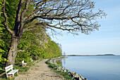 D, Germany, Europe, Mecklenburg Western Pomerania, Rügen, Ruegen, Baltic Sea, Putbus, Lauterbach, Goor, Landscape, Spring, Springtime, Coast, Waterside, Bank, Romantic