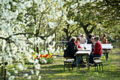 D, Germany, Europe, Brandenburg, Werder a d  Havel, Baumblütenfest, Blossoming, Cherry Blossom, Spring, Blooming, Springtime, Tourists, Guests, Persons, Folk Festival, Public Festival
