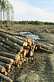 Forestry clear cut in Canada