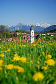 View over meadow with dandelion to Nesselwang, Allgaeu, Swabia, Bavaria, Germany