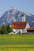 View over meadow with dandelion to church, Speiden, Eisenberg, Allgaeu, Swabia, Bavaria, Germany