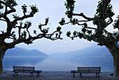 Two benches under big sycamore trees with view to lake Maggiore, Ascona, lake Maggiore, Lago Maggiore, Ticino, Switzerland