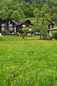 Meadow with flowers, wooden houses in the background, Rossura, valley Leventina, Ticino, Switzerland
