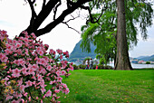 Family walking through city park of Lugano with rhododendron in the foreground, Lugano, Ticino, Switzerland