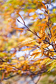 Autumn foliage, Nymphenburg palace park, Munich, Bavaria, Germany