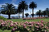 Flowers and palm trees at the seaside promenade, La Spezia, Liguria, Italian Riviera, Italy, Europe