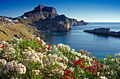 Oleander blossom at Agios Pavlos bay in front of the acropolis, Lindos, Island of Rhodes, Greece, Europe
