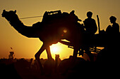 On their way home, farmers head back to their village from the big Naguar camel fair, Rajasthan, India