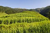 The amazing rice terraces of LongJi in Guangxi, China
