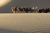 A camel train traversing the vast desert in Ejina, Inner Mongolia