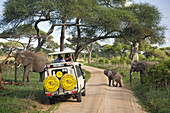 Elephants crossing the road in front of a safari vehicle